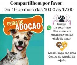 panfleto Feira de adoção Cães e Gatos